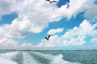 cancun fishing flying pelican